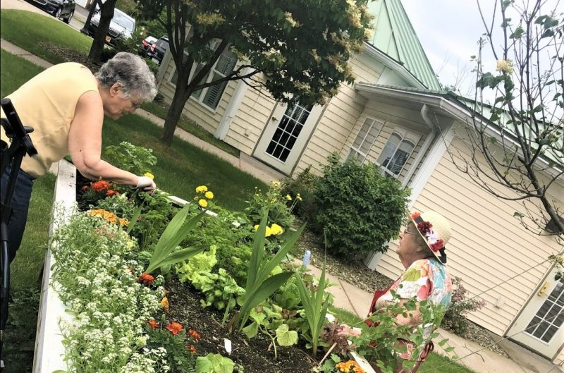 Our Clover Blossom Garden Is Thriving Legacy At Clover Blossom In Brighton Ny